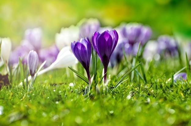 flower-316779_640