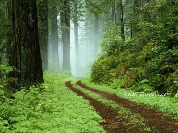 Forest Reiki Garden Zen