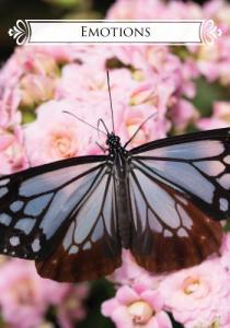 cards_butterfly8