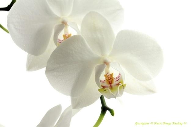 flower-179004_640
